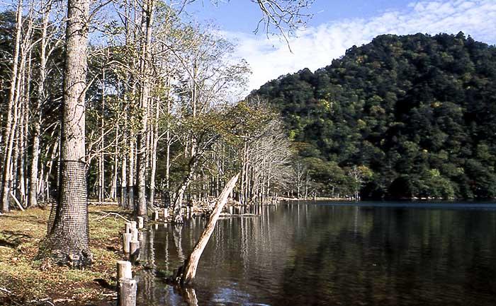 map-gs 奥日光の自然体験(ハイキング、トレッキング) 設定ガイドツアー 春〜秋